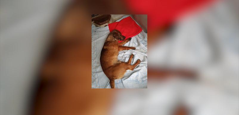 Okonek: Strażacy uratowali psa