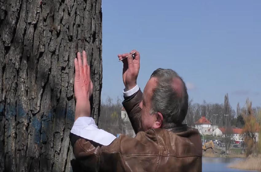 Drastyczna forma protestu przeciwko wycince drzew [VIDEO]