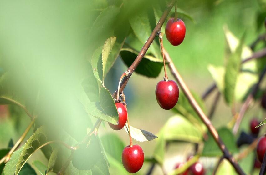 Sezon na letnie owoce trwa w najlepsze