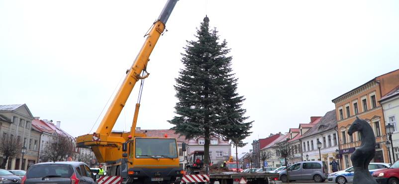 11 metrowa choinka wprowadza świąteczny nastrój na konińskim Placu Wolności