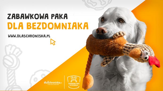 Z okazji Dnia Psa podaruj zabawki bezdomnym czworonogom z Poznania
