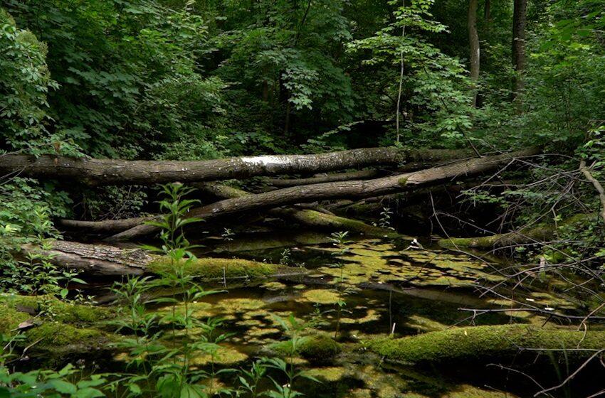 """Wypoczynek w lesie łatwiejszy dzięki stronie """"Czas w Las"""""""